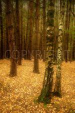John Patterson - A wood in winter