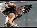 Tim Banks - Angry Bird