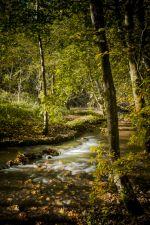 River Alyn in Autumn