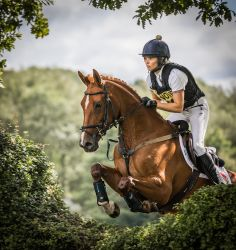 Eventing Hedge Jump